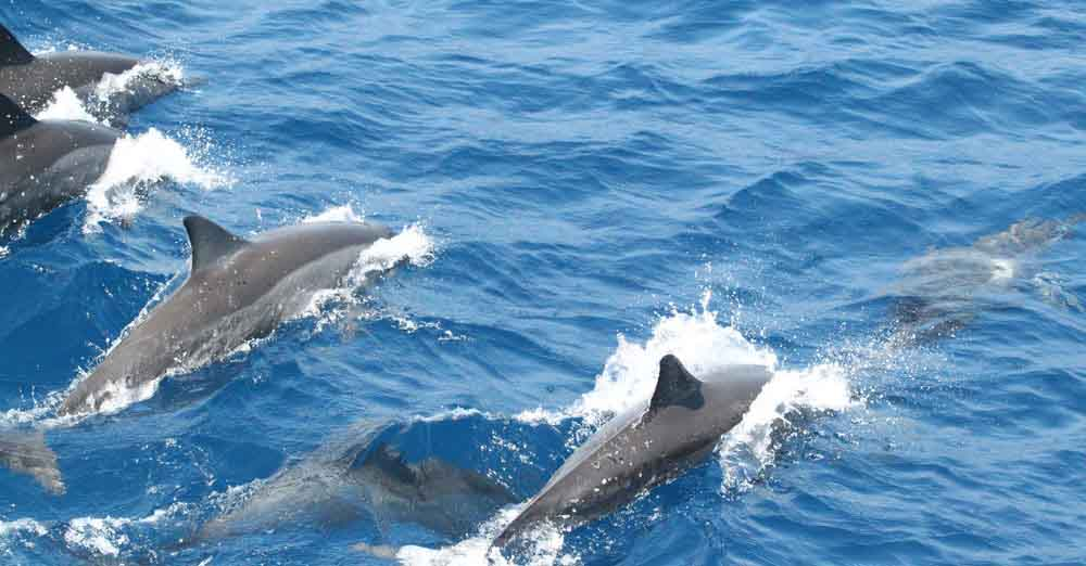 Sri Lanka dolphin watching