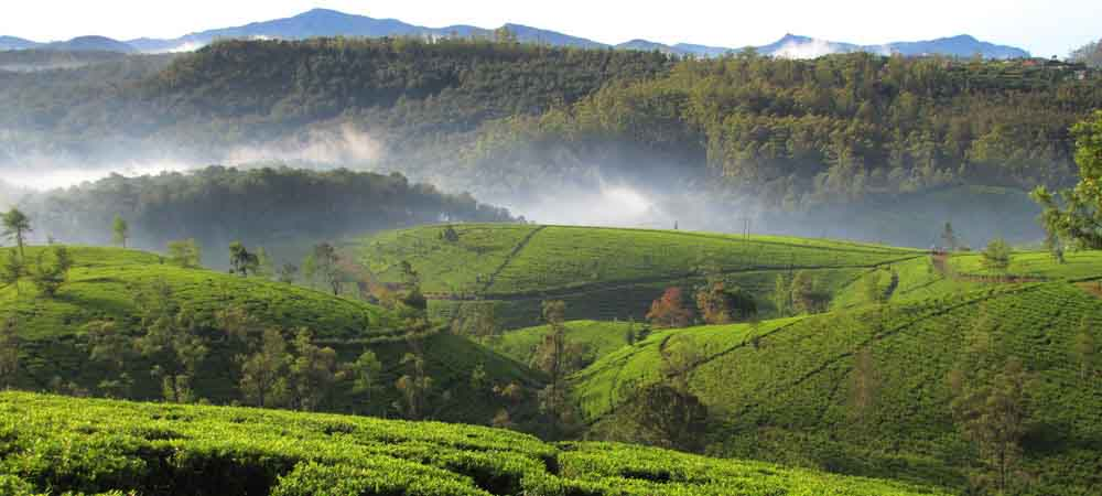 Ceylon nature tour